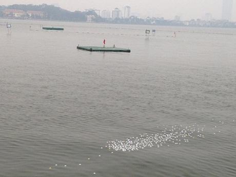 Bóng golf nổi đầy trên mặt nước hồ Tây.