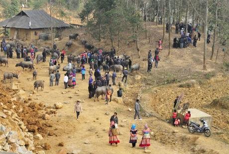 Khu vực bán gia súc nằm ở thung lũngnhỏ phía sau chợ.