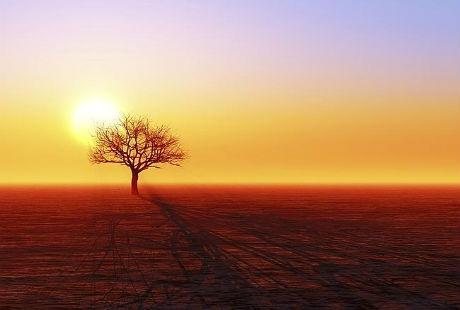 Hình bóng của một cây khô ở Deadvlei.