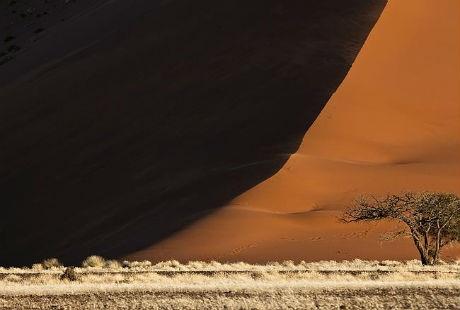 Một cây keo và cồn cát