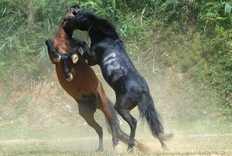 Những lễ hội đua ngựa đặc sắc nhất Việt Nam