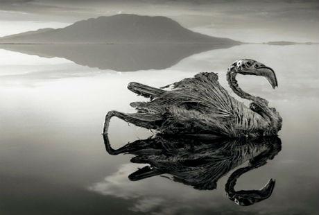 Những sinh vật bị hóa đá vì nước hồ quá mặn và độ kiềm cao
