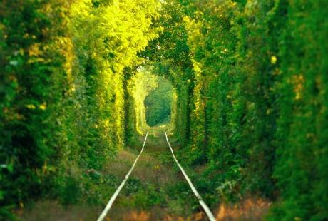 Những đường cây tản bộ đẹp và lãng mạn nhất thế giới