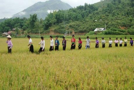 Các cô gái Thái trên cánh đồng Mường Thanh