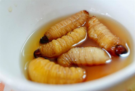 Những con đuông dừa béo tròn hấp dẫn trong bát nước chấm