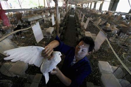 Trung Quốc: 31 ca tử vong do nhiễm cúm H7N9