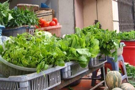 Nhiều mẫu rau xanh phát hiện có dư lượng thuốc BVTV vượt ngưỡng.