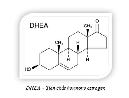 Suy giảm estrogen - nguyên nhân chính gây khô hạn ở phụ nữ
