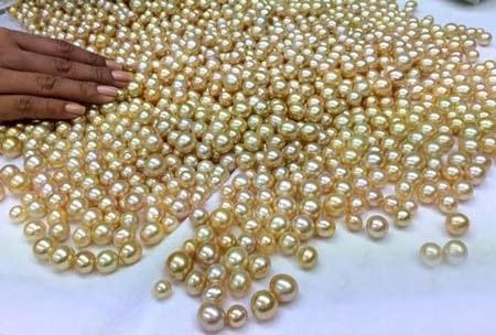 Ngọc trai báu vật của đại dương ban tặng cho con người