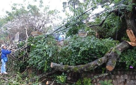 Hiện trường cây thông đổ xuống đường