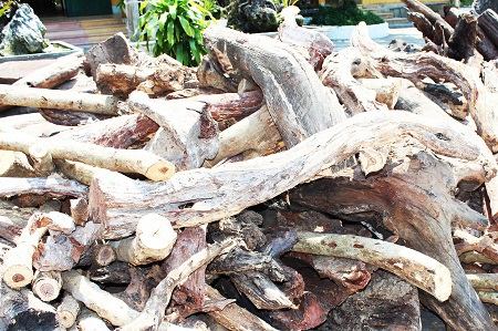 Một phần gỗ lậu bị cơ quan chức năng tỉnh Khánh Hòa tạm giữ.