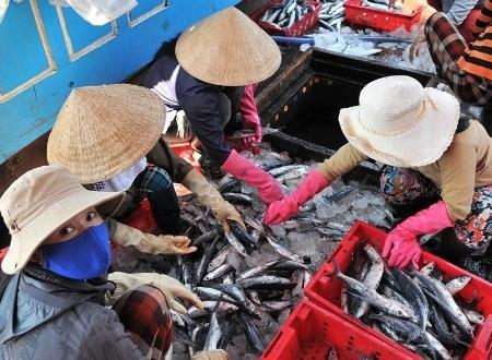 Vợ những ngư dân phân loại cá tại khoang tàu chứa cá để bán cho thương lái.
