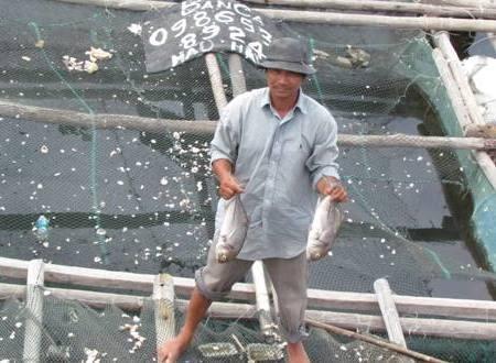 Ông Cao Nhanh chua xót khi cá chuẩn bị thu hoạch lại chết hàng loạt.