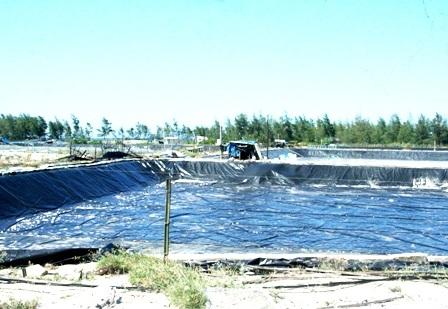 """Hàng trăm hồ nuôi tôm """"đắp mền"""" vì... tự gây ô nhiễm - 4"""
