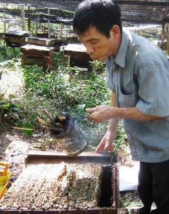 Độc đáo nghề đưa ong đi... tìm mật - 3
