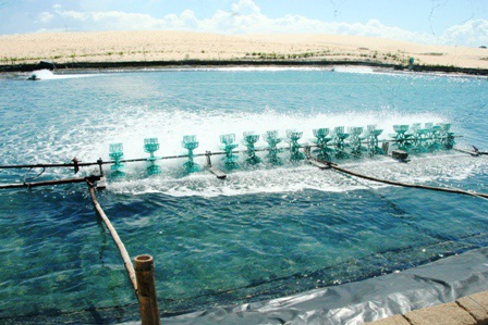"""Hàng trăm hồ nuôi tôm """"đắp mền"""" vì... tự gây ô nhiễm - 3"""