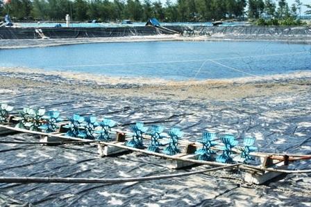 """Hàng trăm hồ nuôi tôm """"đắp mền"""" vì... tự gây ô nhiễm - 2"""
