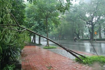 Đường phố Huế ngập trong trận mưa lớn - 3