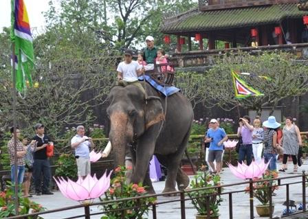Cưỡi voi đi tham quan trong Đại Nội (ảnh: Đức Phương)