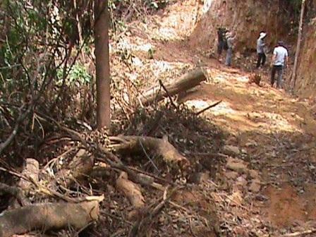 Đường mòn được mở lớn tạo lối vào hiện trường đào rừng