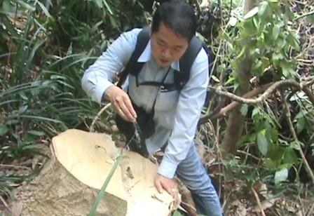 PV tiếp cận 1 gốc cây to bị đốn hạ với vết mùn cưa còn mới toanh