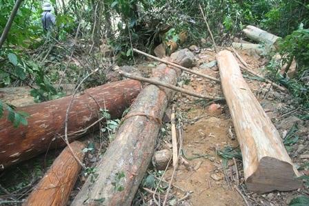 Các đòn bẩy để đẩy cây từ khu vực khai thác xuống dốc