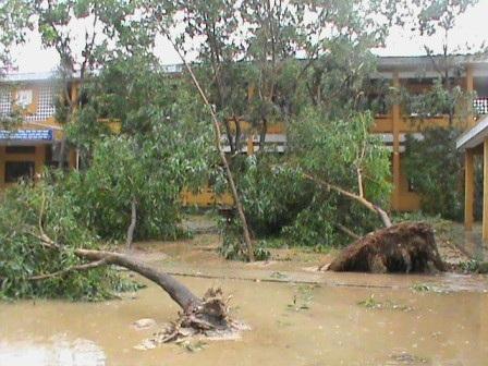 Hàng chục gốc cây xanh bị bật gốc trong sân trường Tiểu học Phú Tân