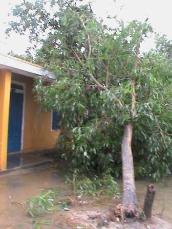 1 cây khá to đổ sập vào phòng học
