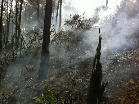 Bìa rừng với nhiều thực bì cháy rụi