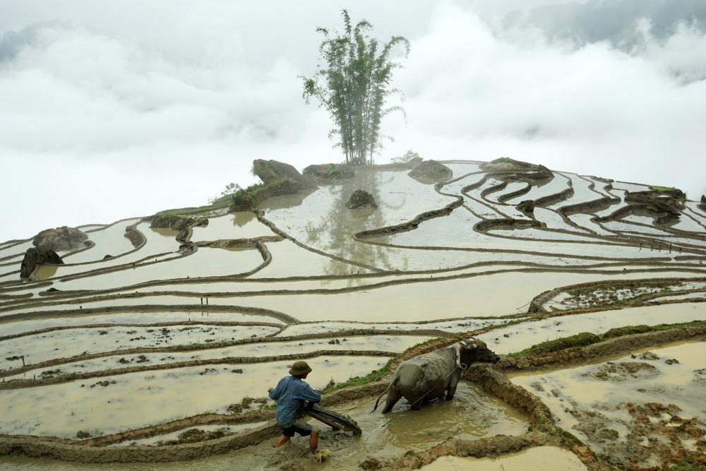 Thửa ruộng của xã Dền Sáng đã được tích đầy nước sau những cơn mưa.