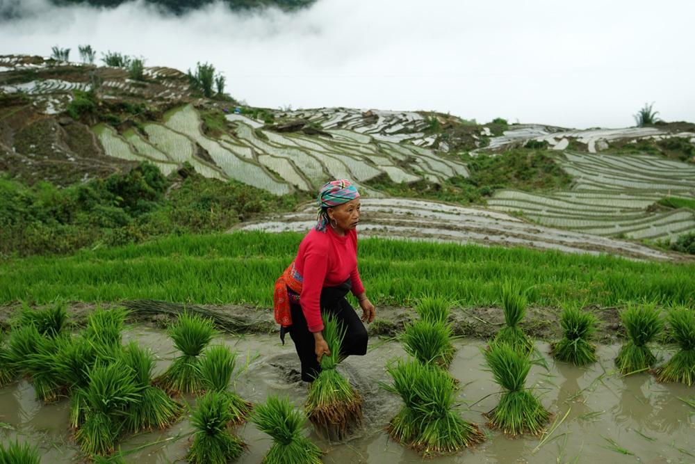 Lác đác đã có một số thửa ruộng bắt đầu được cấy lúa.