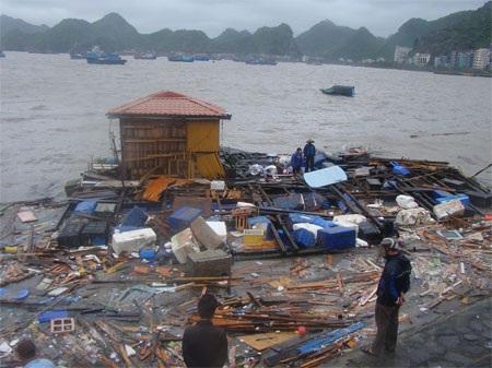 Bão xé đảo Cát Bà - Hải Phòng (ảnh: Anh Thế)