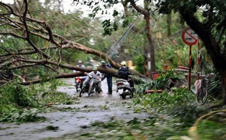 Hình ảnh hoang tàn ở Thái Bình, khi cơn bão quét qua (Ảnh: Tiến Nguyên)