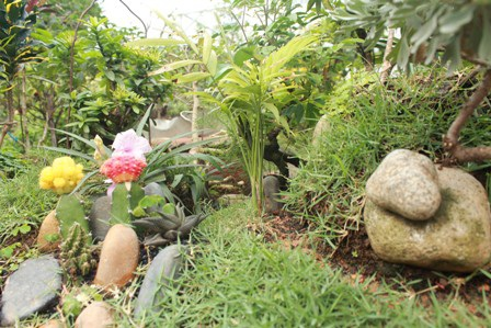 Con đường nên thơ với hoa và đá dưới chân đồi và cây cầy bắt qua suối
