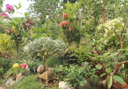 """Một quả đồi trong """"Đường mòn Hồ Chí Minh"""" với rất nhiều cây cối, hoa lá"""