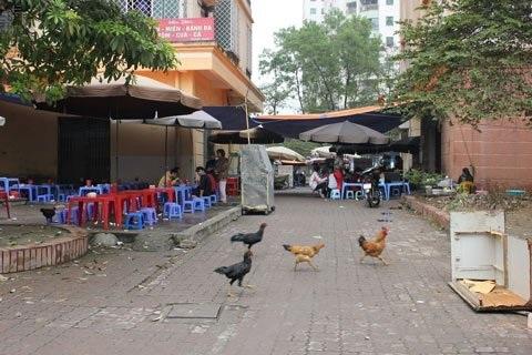 Tranh thủ nuôi gà ở khu nhà tái định cư giữa lòng thủ đô (ảnh minh họa: VietNamnet)