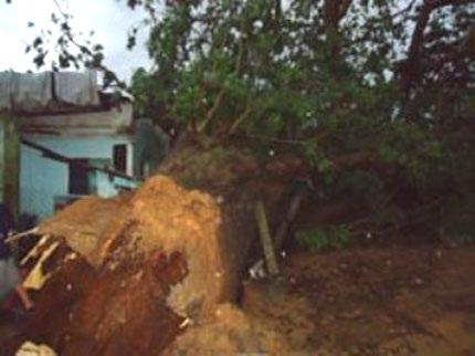 Cây cổ thụ Dầu Lai đè sập ngôi nhà của bà Nhung khi trong nhà đang có 10 người trú mưa
