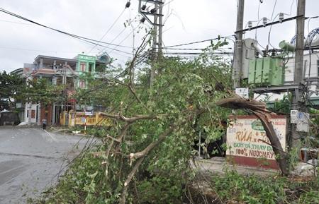 Cây xanh gãy đổ tại TP Hạ Long.