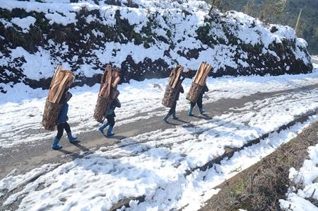 Những người phụ nữ Hà Nhì tận dụng cây bị đổ do tuyết lấy củi về sưởi ấm.