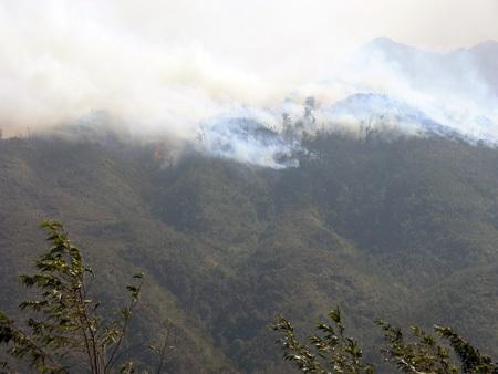 Đám cháy tại rừng quốc gia Hoàng Liên cơ bản đã được dập tắt.