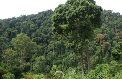 Đầu tư thủy điện cũng triệt hạ nhiều khu rừng