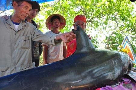 Cá Ông lụy vào bờ biển được ngư dân chôn cất và thờ cúng trong Lăng Ông Nam Hải.