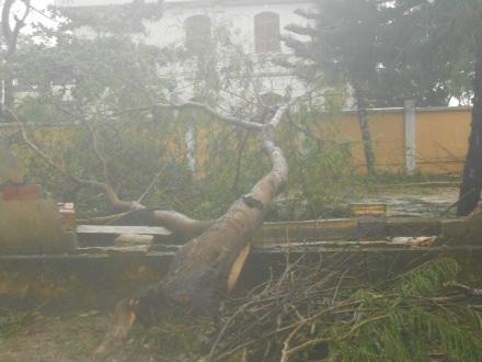 Nhiều cây xanh gãy đổ sau trận lốc xoáy