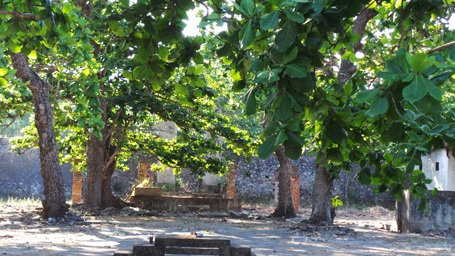 Những cây bàng trăm tuổi trong các trại tù