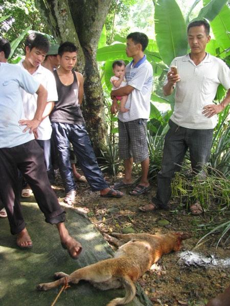 Một con chó nghi dại bị người dân tiêu diệt.