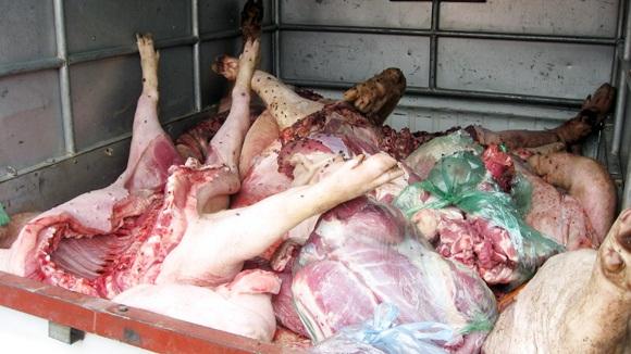 """Hàng tấn lợn mắc dịch bệnh tai xanh được chế biến thành """"đặc sản"""""""