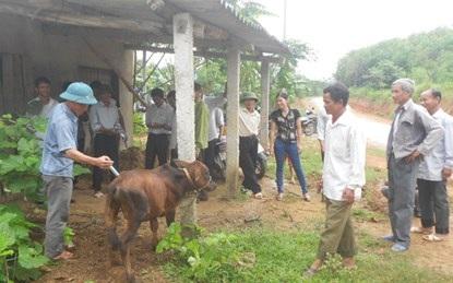 Học viên lớp dạy nghề chăn nuôi tại xã Kỳ Trung, Kỳ Anh, Hà Tĩnh.