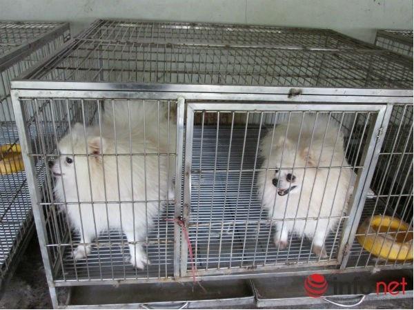 Để đi chơi Tết thoải mái, nhiều người phải chi tiền triệu để gửi thú cưng