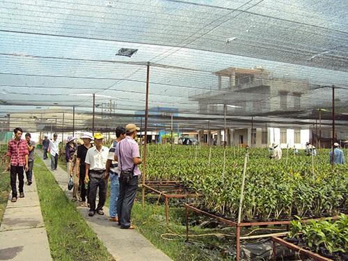 Người dân tham gia lớp dạy nghề trồng cây cảnh ở huyện Củ Chi, TP HCM Ảnh: Hồng Nhung
