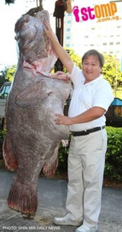 Con cá mú này sẽ phục vụ 700 khách